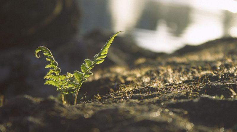agriculture raisonnée, l'agriculture biologique et la biodynamie